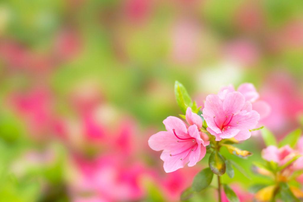 【皐月 -May-】5月の特集まとめ