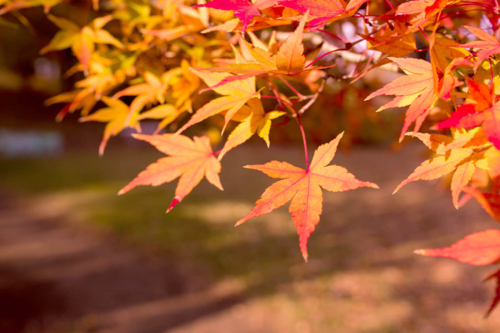 【霜月 -November-】11月の特集まとめ