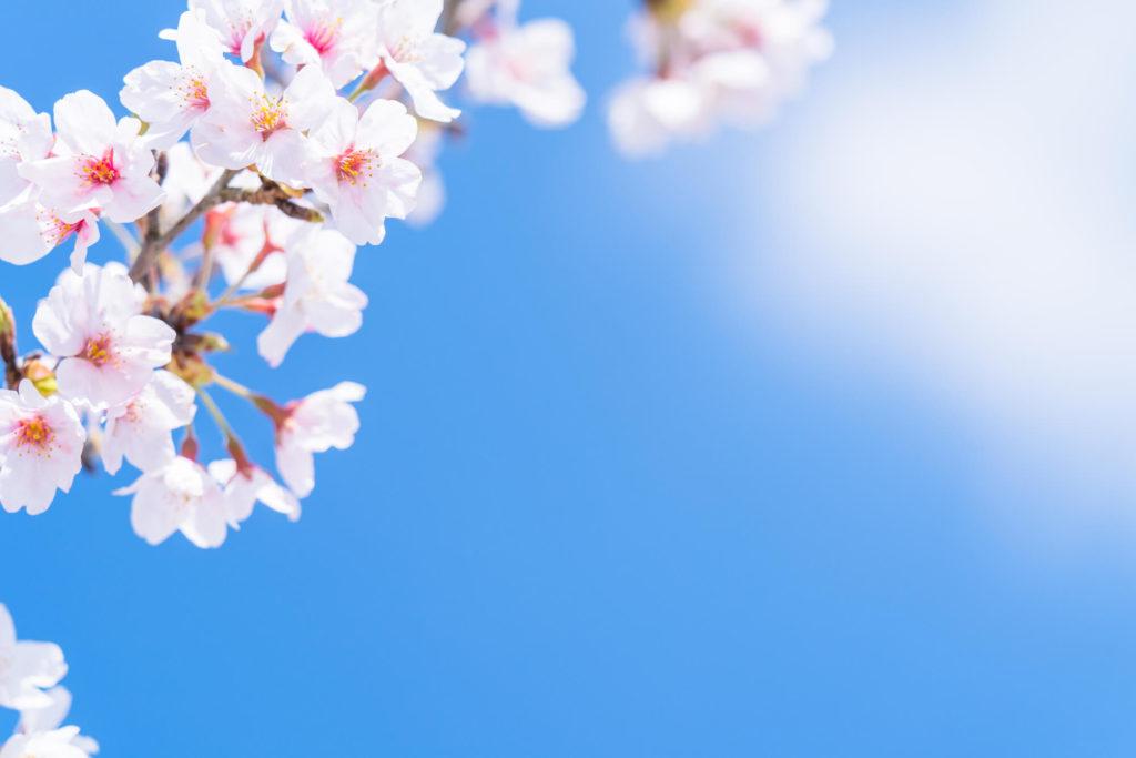 【弥生 -March-】3月の特集まとめ