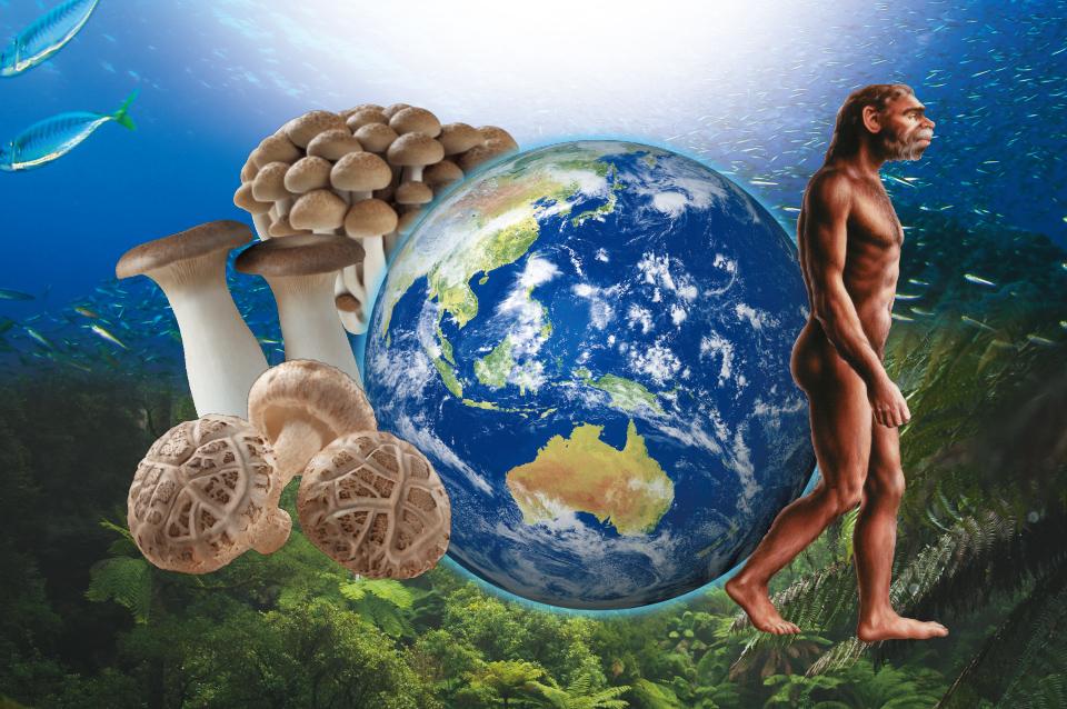 同じ祖先をもつ、人ときのこの奇跡の関係<br>第1回 生命の共通祖先は「菌」だった