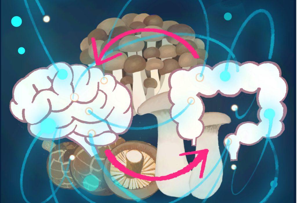 歴史が育んだ、きのこの効果と人体の秘密<br>第7回 腸脳相関の神秘と心身の健康に寄り添うきのこ